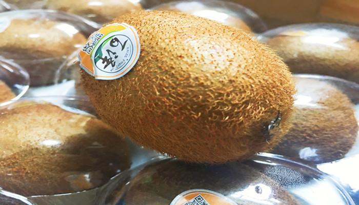 百泽猕猴桃优质大果