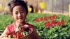 瑞信果蔬农庄草莓采摘