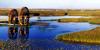 鸣翠湖国家湿地公园